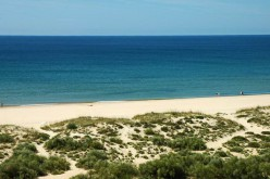 Playa Verde: Sol y mar en un bosque de pinos piñoneros