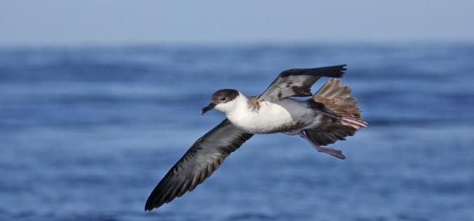 Salida al campo en Olhao para la observación de aves migratorias