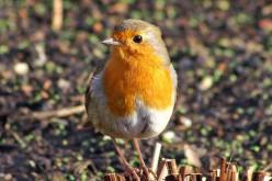 De ruta por el Algarve con las aves paseriformes