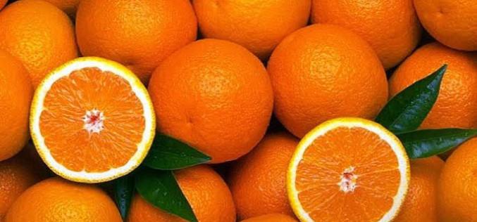 Silves tendrá de nuevo sabor a naranja
