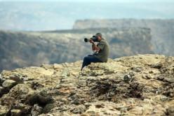 El Festival de Observación de Aves regresa a Sagres en octubre