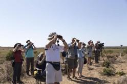 El Festival de Observación de Aves lleva a Sagres unas 300 actividades