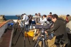 Sagres recuenta sus aves marinas del Cabo San Vicente