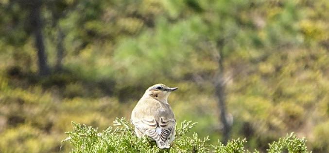 Menos de un mes para el Festival de Observación de Aves