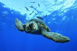 Las mejores fotografías de las Azores, en una muestra en Olhao