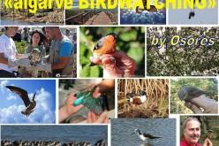 Nueva web dedicada a la fotografía de aves en el Algarve