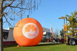 Silves se prepara para la segunda Muestra Silves Capital de la Naranja