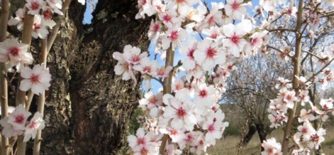 Almendros en flor, Loulé Creativo 2019