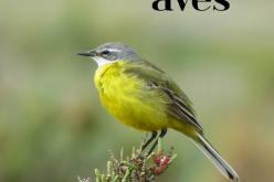 Vila do Bispo promueve el X Festival de Observación de Aves