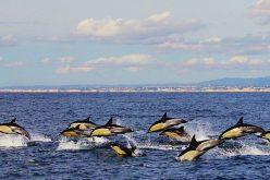 Algarve consolida resultados turísticos em 2018