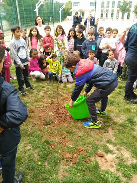 Loulé celebra Dia Internacional das Florestas 2019